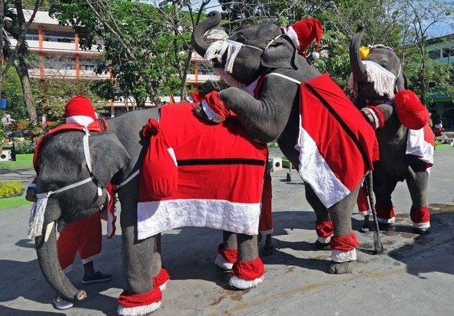 Фото прикол  про слонов и новый год