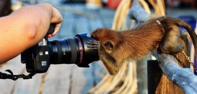 Фото прикол  про обезьян и фотоапарат
