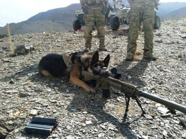 Фото прикол  про армию и собак