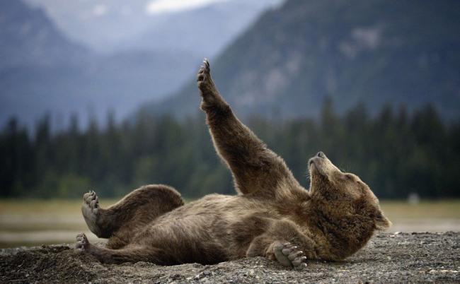 Фото прикол  про медведей