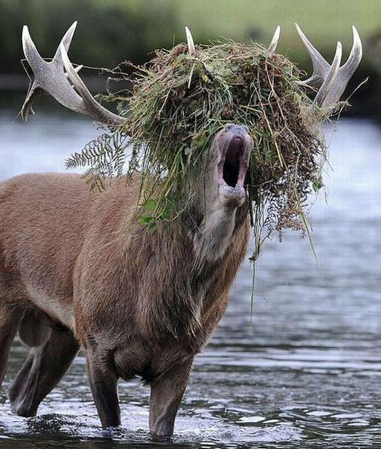 Фото прикол  про лосей
