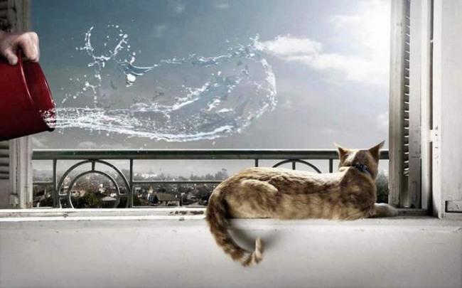 Фото прикол  про котов и месть