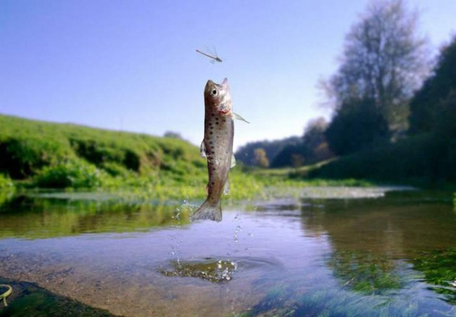 Фото прикол  про рыбу