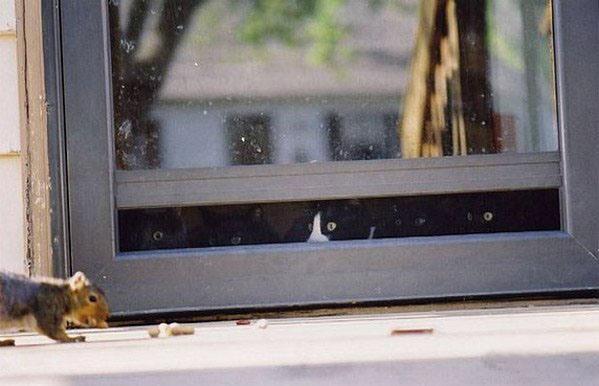 Фото прикол  про котов и белку