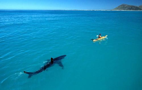 Фото прикол  про акул
