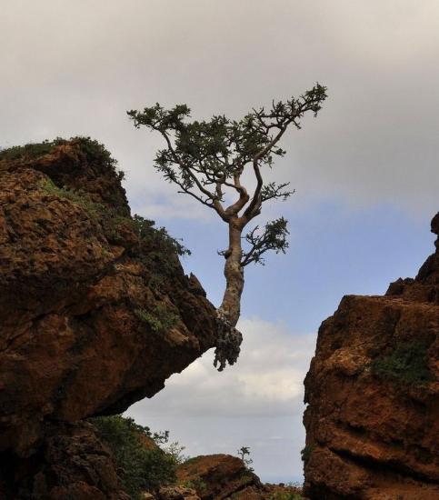 Фото прикол  про дерево