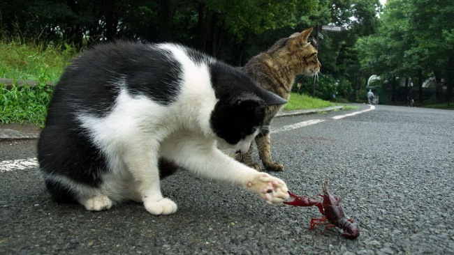 Фото прикол  про котов и раков