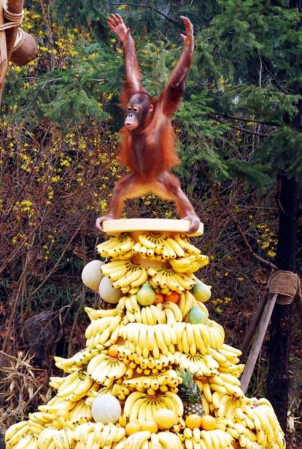 Фото прикол  про обезьян и банан