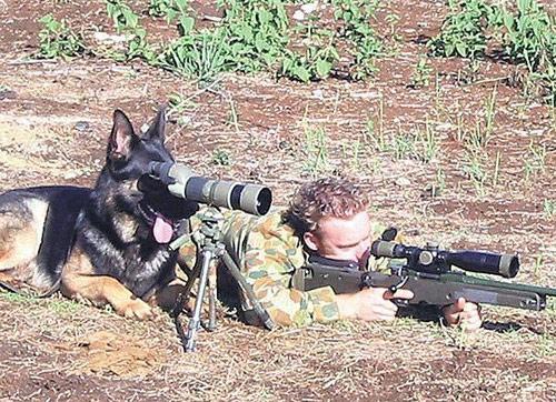 Фото прикол  про снайпера и собак