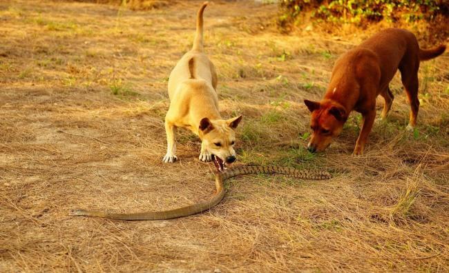 Фото прикол  про собак и змей