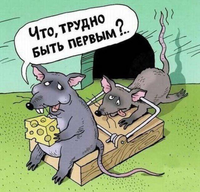 Картинка  про мышеловку, мышей, циничная черная