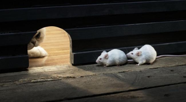 Фото прикол  про котов и мышей