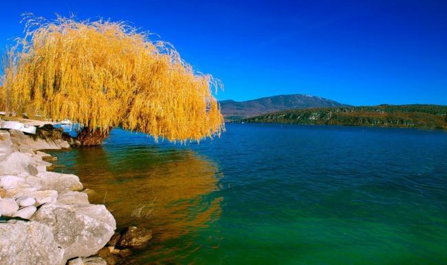 Фото прикол  про осень и дерево