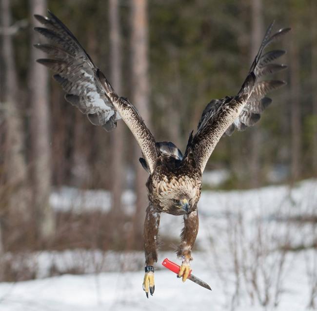Фото прикол  про птиц и нож