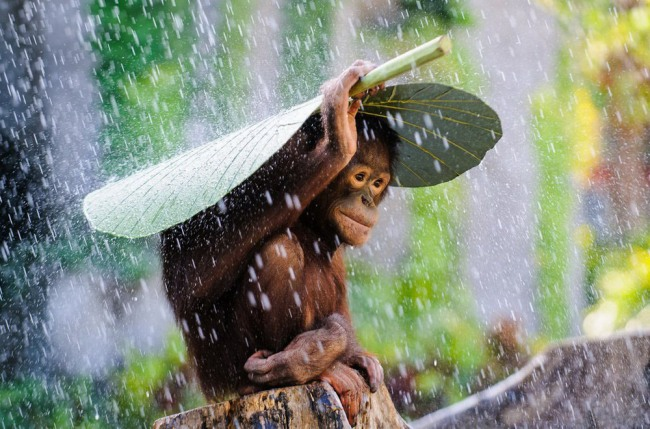 Фото прикол  про обезьян