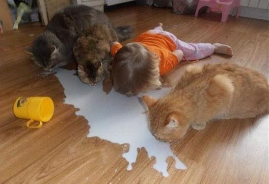 Фото прикол  про котов и детей