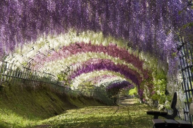 Фото прикол  про цветы