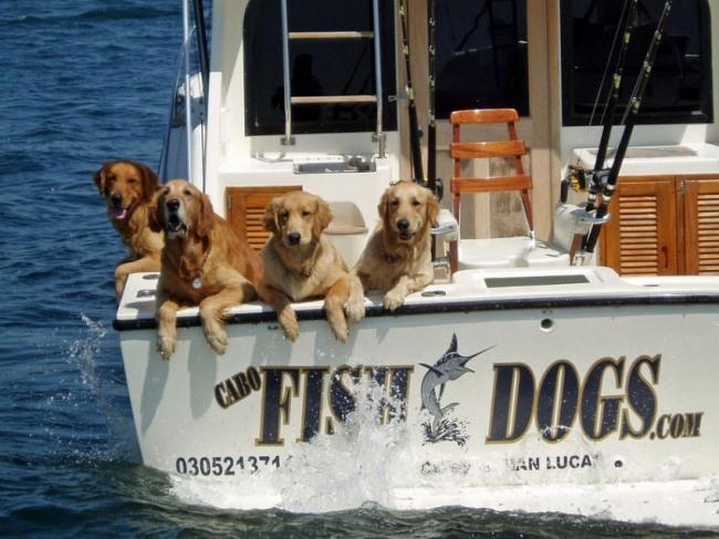 Фото прикол  про собак и рыбалку