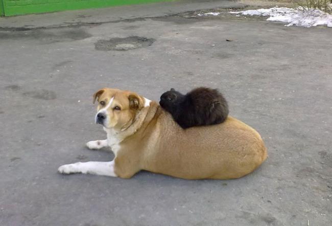 Фото прикол  про собак и котов