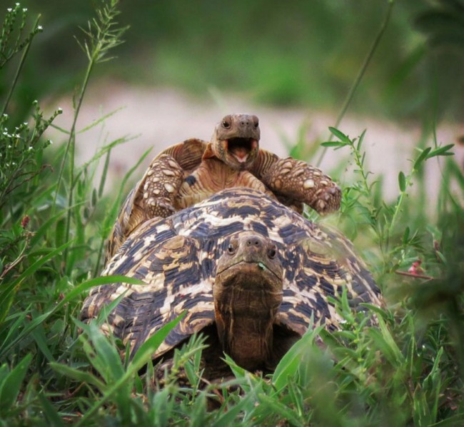 Фото прикол  про черепаху