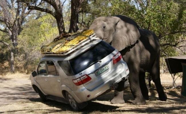 Фото прикол  про слонов