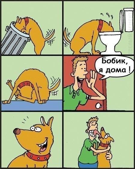 Картинка  про собак