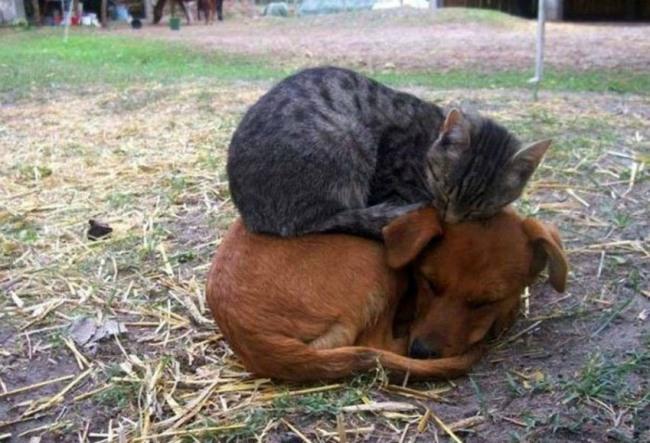 Фото прикол  про котов и собак