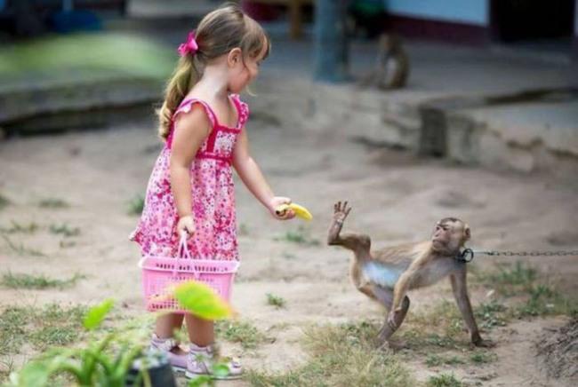 Фото прикол  про маленькую девочку и обезьян