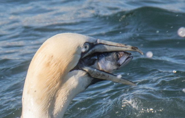 Фото прикол  про птиц и рыбу