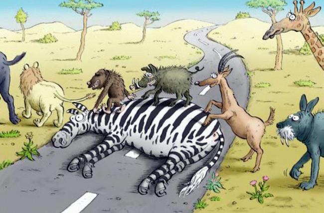 Картинка  про зебру