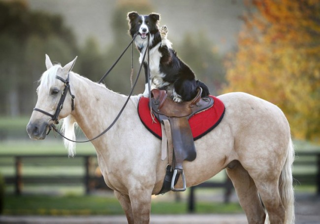Фото прикол  про собак и лошадей