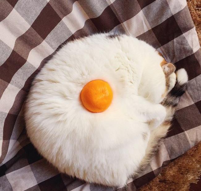 Фото прикол  про котов и апельсины