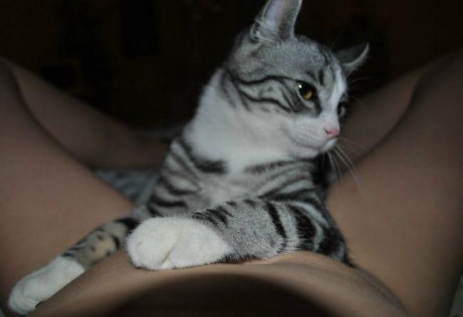 Фото прикол  про котов пошлый