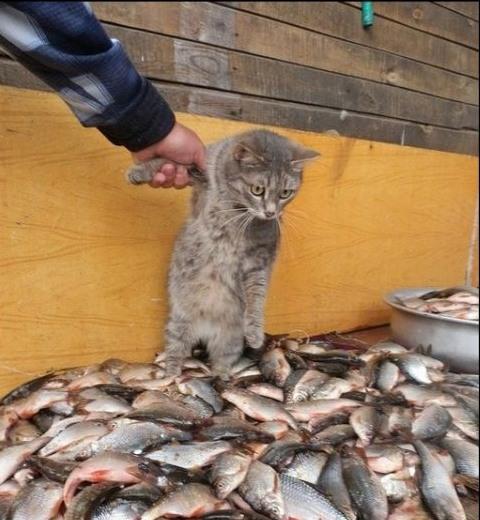 Фото прикол  про котов