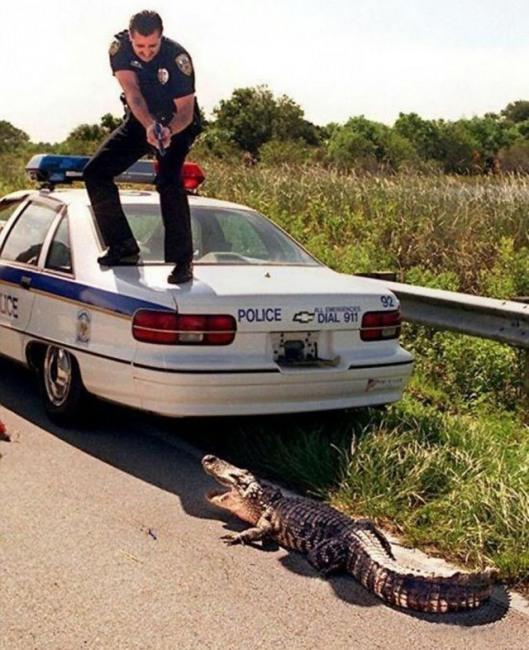 Фото прикол  про полицию и крокодилов