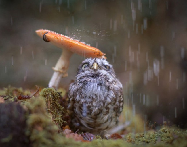Фото прикол  про птиц, дождь и грибы