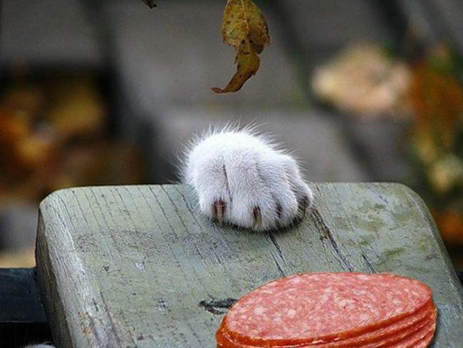 Фото прикол  про котов и колбасу