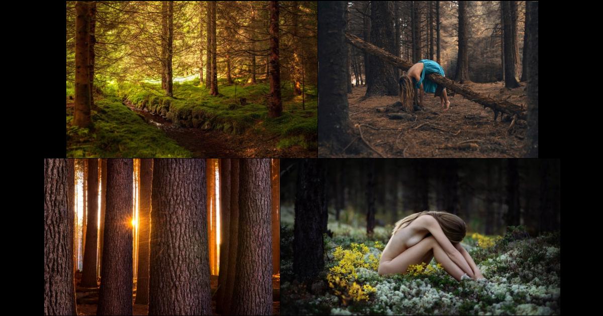 изучения разные приколы в лесу фото применяется строительной