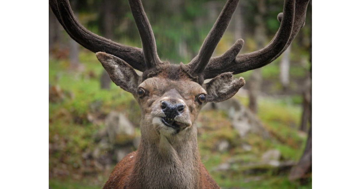 Узнать, картинки прикольные олень