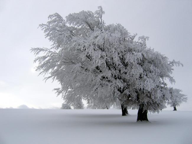 Фото прикол  про мороз