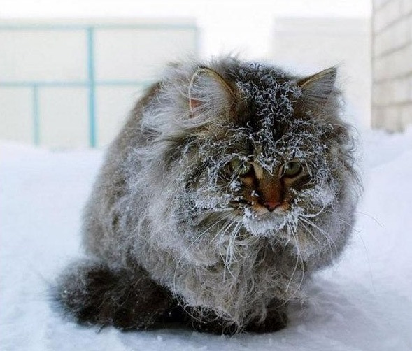 Фото прикол  про котов и зиму