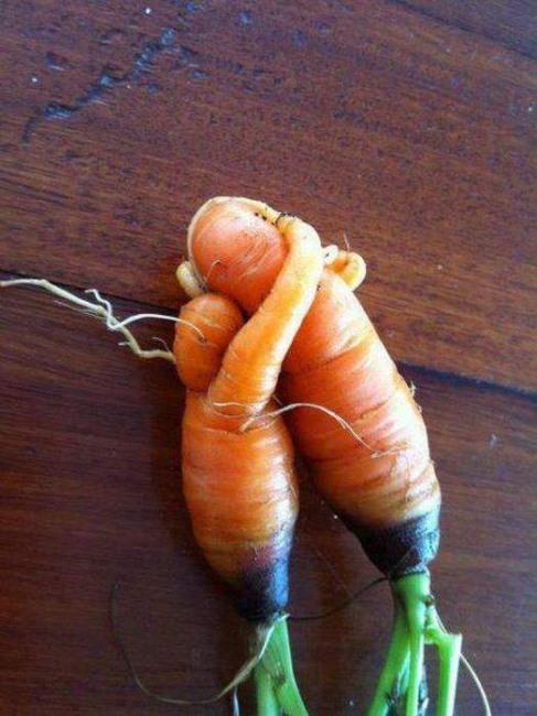Фото прикол  про овощи