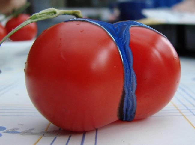 Фото прикол  про помидоры пошлый