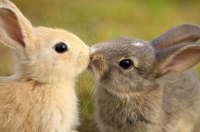 Фото прикол  про зайцев и поцелуи