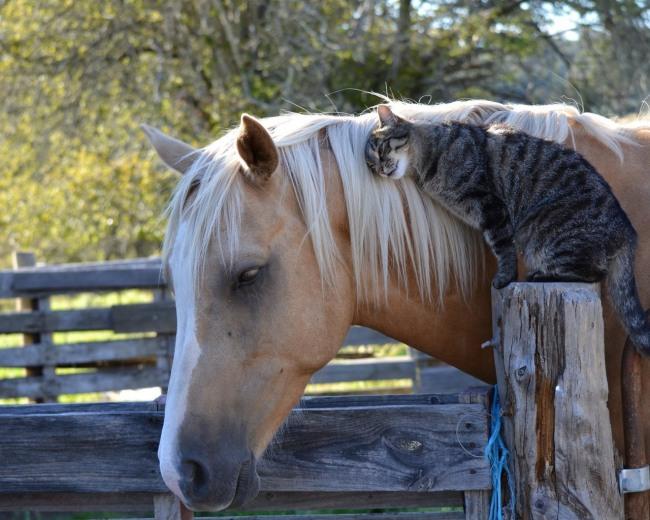 Фото прикол  про котов и лошадей