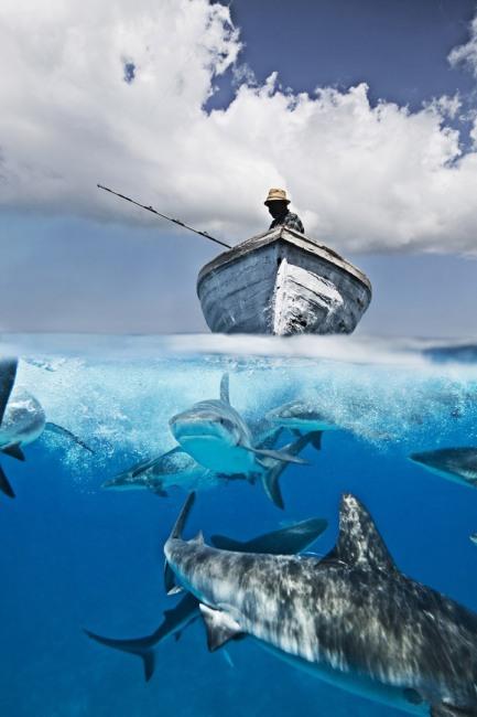 Фото прикол  про рыбалку и акул