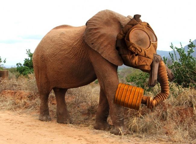 Фото прикол  про слонов и противогаз
