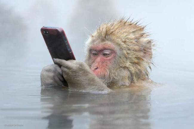 Фото прикол  про обезьян и телефон