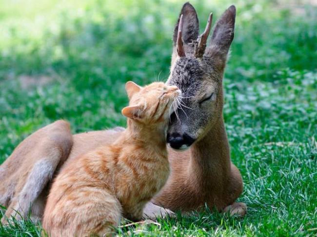 Фото прикол  про котов и оленей