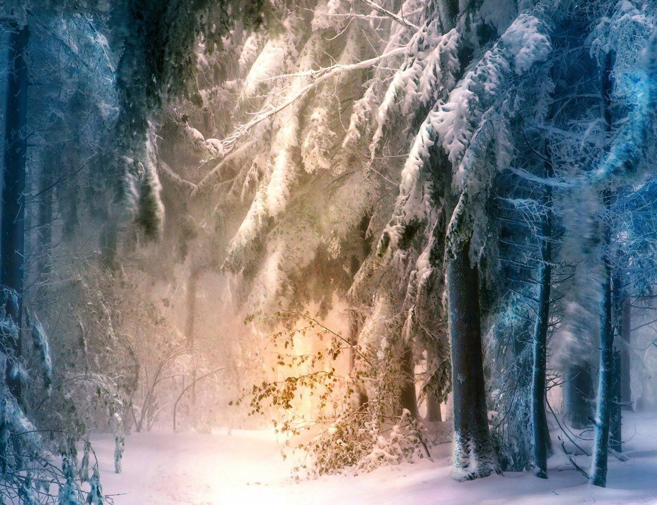 Прикольные, картинки сказочный лес зимой